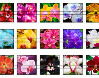 Orchids - 1 inch squares, graphics for scrapbooking, stickers,magnets, Digital Printable Images File 4x6 BUY 2 GET 1 FREE