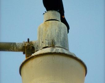 Black bird perched