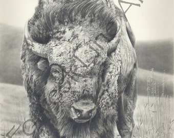 "Bison, Buffalo Pencil (Graphite) Drawing ""No Bullshy"" Open Edition"