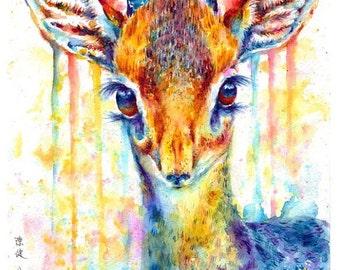 Small Mounted Print: antelope