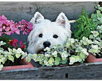"""This beautiful 5"""" x 7"""" Westie Birthday card comes with a white envelope and is individually cellophane wrapped."""