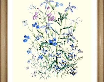 "Botanical Print.  Lobelia. Flower Print. Flower Art. Botanical Wall Art. 8x10"""