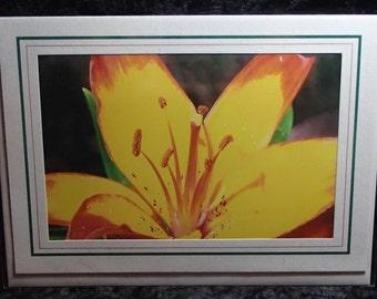 Lily Photo Greeting Card / Original Photo Art Greeting Card / All Occasion Photo Greeting Card / Blank Inside Photo Greeting Card