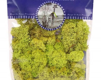 Preserved Reindeer Moss by Super Moss in 2oz Bag (Brown, Forest, Natural, Moss, Chartreuse)