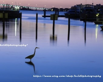 Heron Hunting~ **Art**Paradise**Unedited**Wall Art* *Office Art**Photography**Print**  **Decor**Design**Photographic Art**  *Night Photo**