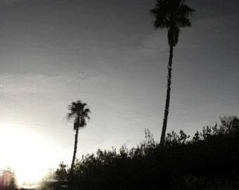 Palm Reflections~ **Art**Paradise**Unedited**Wall Art* *Office Art**Photography**Print**  **Decor**Design**Photographic Art** *Trees*Water*