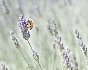 Pastel Wall Decor, Purple Living Room Art, Lavender Wall Decor, Honey Bees Photo Print, Nature Photography - Lavender For Bees