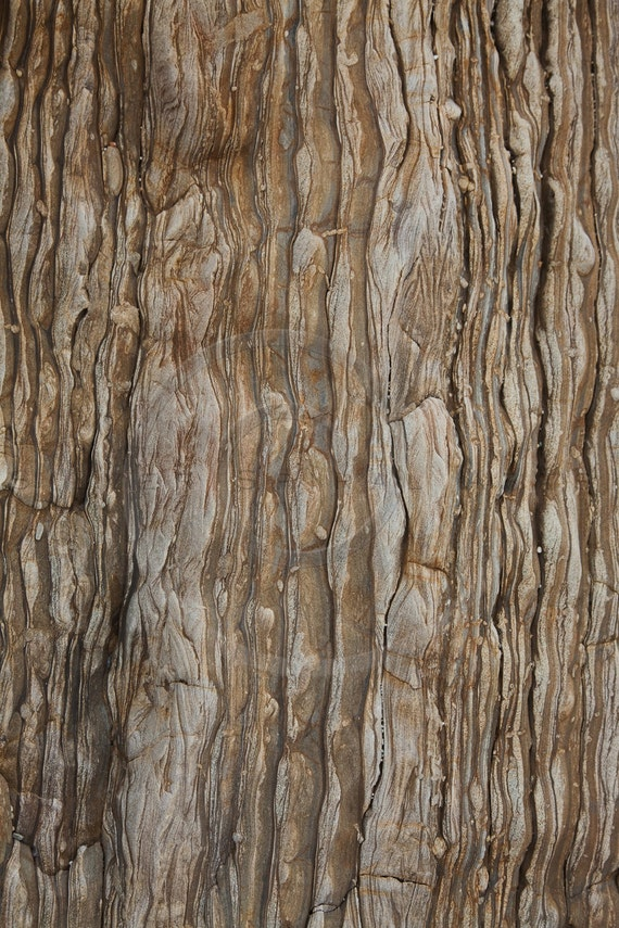 evergreen tree bark background - photo #35