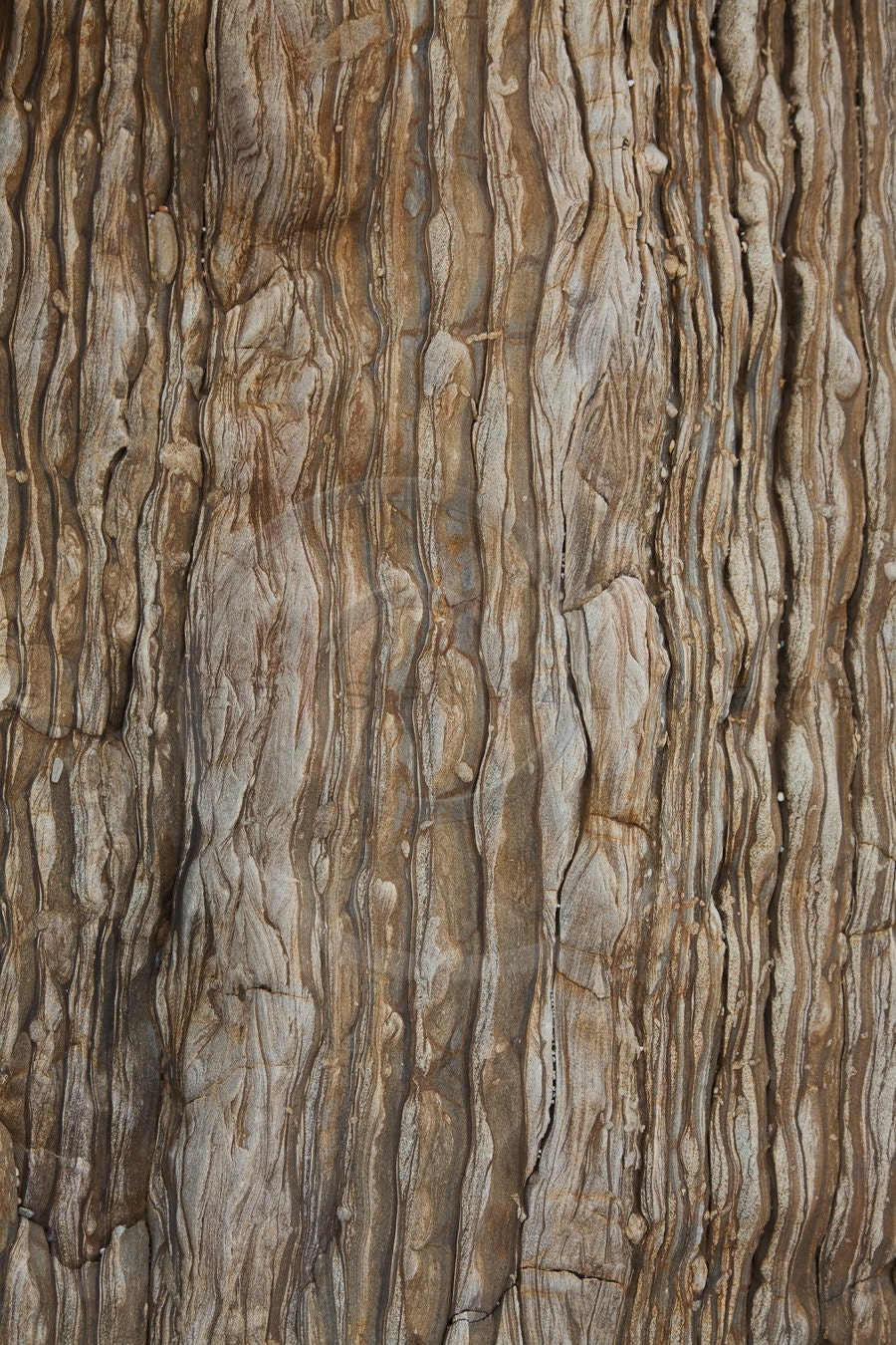 Dark Tree Bark Photography Background Instant Download