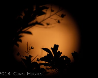 Full Moon Photography, Moon Photography, Nature Photograghy, Full Moon Rising