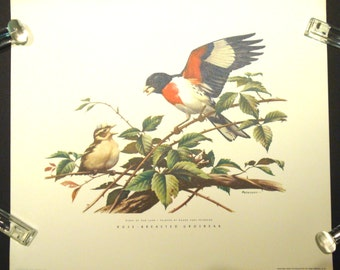 Rose-Breasted Grosbeak Vintage 1958 Lithograph Art Print Birds of Our Land by Roger Tory Peterson FREE Domestic Shipping