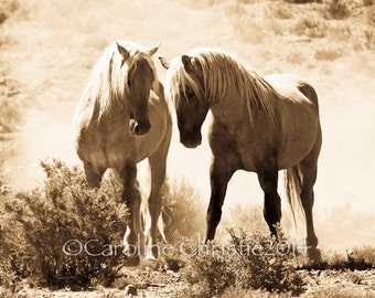 """Horse Photograph. Wild Horse Photo from the Sand Wash Basin in Colorado. Title: """" The Competition """""""