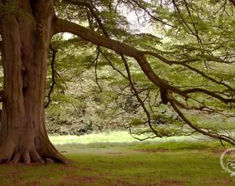 Tree Digital Backdrop