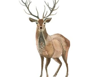 Watercolor Deer Art Print - painting, animals, nature, watercolor painting, art print