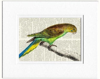 parakeet dictionary page print