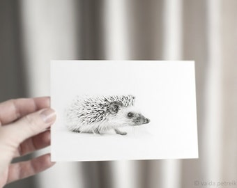 Hedgehog greeting card - Woodland animal postcard - Cute hedgehog photo art card - Hedgehog gift - Woodland art - Baby shower invitation