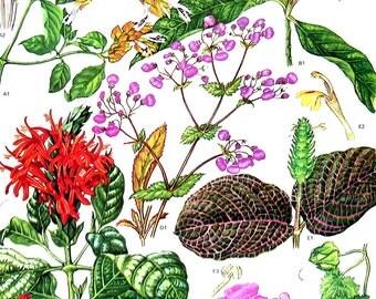 Flowering Quince, Christmas Pride, Nerve Plant - Botanical Print - 1988 Vintage Flower Print