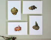 Botanical Canvas Prints-Bulbs,Tubers and Corms watercolour illustrations-gift for botanist-gift for gardener-arisaema,gladiolus and scadoxus