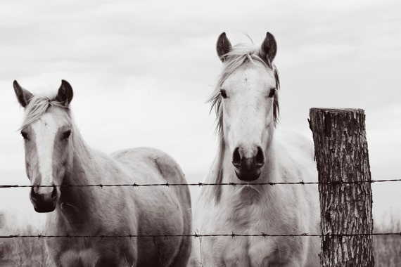 Horse photography, southwest, midwest, wall decor, equestrian, western, brown, black, white
