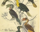 CLEARANCE Vintage Book Plate Birds