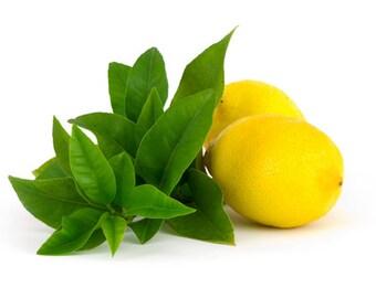 BODY LOTION ~ Lemon Verbena scented Lotion Silk Shea Butter Body Lotion 8 oz Bottle