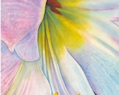 Giclee Print of watercolor painting, Amaryllis, flower, floral, close up, gold, pink, blue, wall art, home decor, unframed, archival, giftl