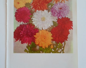 Vintage 1960s  Red Pink White  Yellow Garden Chrysanthemums Flowers Book Darling Photo Book Plate