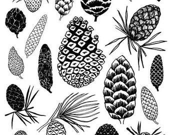 Pinecones, limited edition giclee print