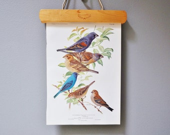 Vintage Bird Book Plate - Indigo Bunting and Blue Grosbeak
