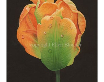 Peach Tulip, Large Giclee Print