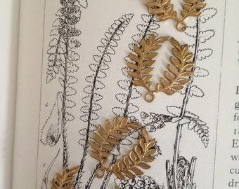 Fern Frond Laurel Leaves ( 4 pc)
