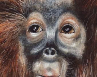 Limited Edition Print of Original Orangutan Watercolor Painting