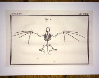 bat skeleton glorious creepy nature print