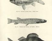 Antique Print, Fish Chart 1930s beautiful wall art vintage b/w lithograph illustration bookplate