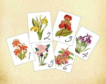 Orchid Table Cards,  Orchid Table Numbers, Hawaii Wedding Decoration, Tropical Wedding Table Card