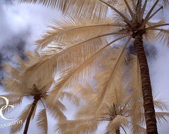 "5x7, Digital Print, ""Palm Perspective No 1"""