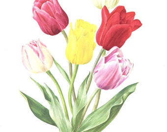 1972 Vintage tulip art floral watercolor flowers Botanical poster French country decor  Botanical art Vintage botanical print Flower print