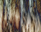 Winter Woods Abstract,  nature Photography print 8 x 10