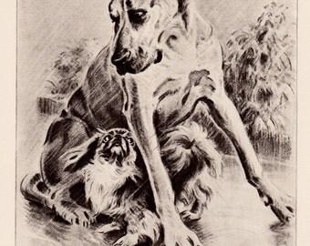 1940s GREAT DANE and PEKINGESE Art Print Dog Lovers Gift Childrens Room Decor Vintage Illustration Artwork  2108