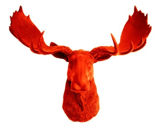 Fake Moose Head Wall Hanging - The Asher - Orange Resin Moose Head- Animal Wall Decor - Chic Animal Sculpture by White Faux Taxidermy
