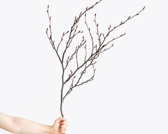 fine art photography print by Sanne Griekspoor (still life, nature, hand, branch)