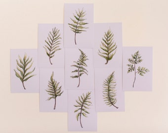 Set of 9 Fern Prints, Botanical
