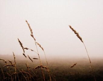 Landscape Photography - Grasses in the Mist Print - Irish Scenery - Misty, Moody Home Decor - 8x10