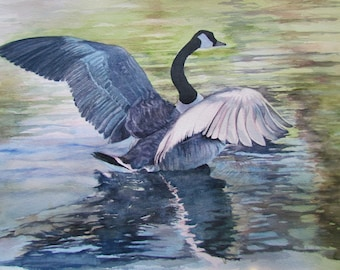 Original Fine Art Watercolor of Canada Goose Lifting Off by Sarah Buell Dowling