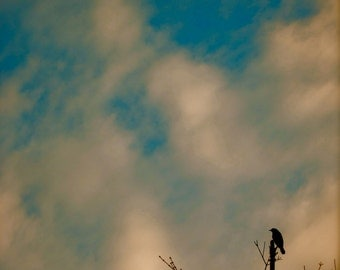 Nature Photography, Bird Photography, Sky, Clouds, Blue, Bird, New England, Dreamy, fPOE, Bird in Watercolor Sky