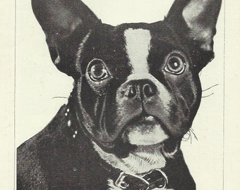 Boston Terrier dog Print 1935 Dog vintage print art canine dog picture home decor wall art