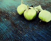 Little Green Apples, 5x7 still lfe food photograph, lime green teal blue, fall green apple photo, for the foodie, kitchen decor