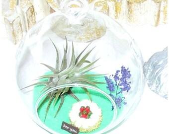 Seaside Celebration Terrarium™ Tillandsia Glass Orb, Air Plant Kit, Nautical Decor Beach ~ Birthday Gift ~ Hostess Gift  ~ Housewarming Gift
