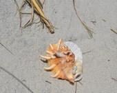 Custom Order- Seashell Boutonniere