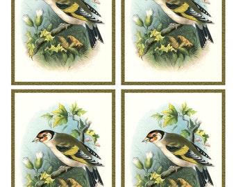 Antique European GOLDFINCH  BIRD Framed Image Sheet - Digital INSTANT Download - nature avian songbird ephemera print collage supply